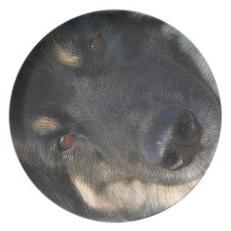 Placa del perro del perro chino plato