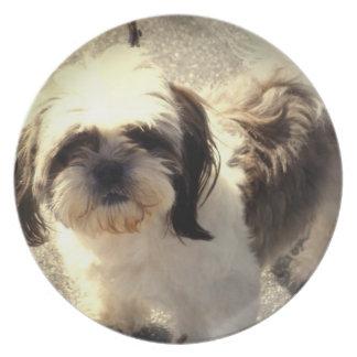 Placa del perro Shih-Tsu Plato De Comida