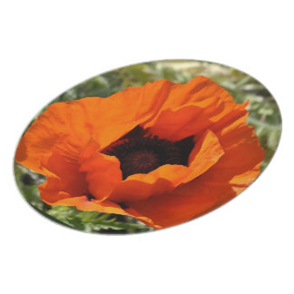Placa del rojo anaranjado de la amapola platos