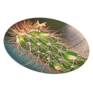 Placa espinosa de la melamina del cactus plato