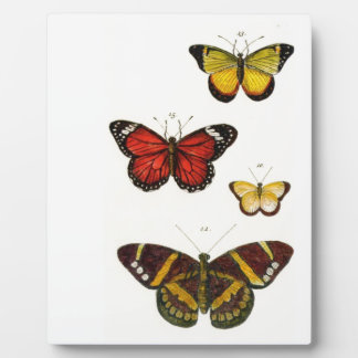 Placa Expositora 4 mariposas