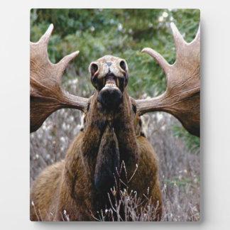 Placa Expositora alces extraños del toro