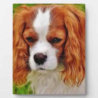 Placa Expositora Animal de mascota divertido arrogante del perro de