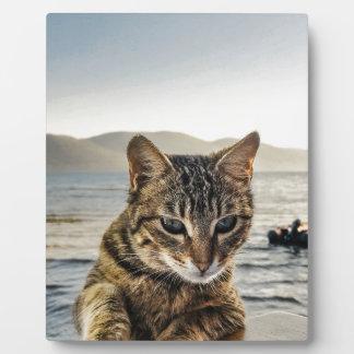 """Placa Expositora """"Aquí estoy"""" digo el gato"""