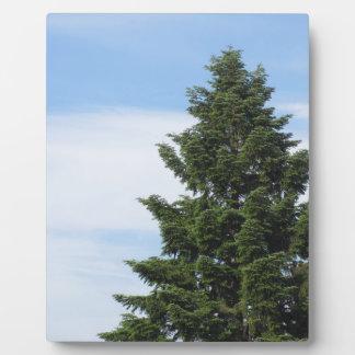 Placa Expositora Árbol de abeto verde contra un cielo claro
