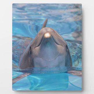 Placa Expositora Cabeza del delfín de bottlenose