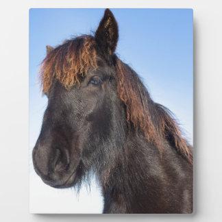 Placa Expositora Cabeza del retrato del caballo negro del Frisian