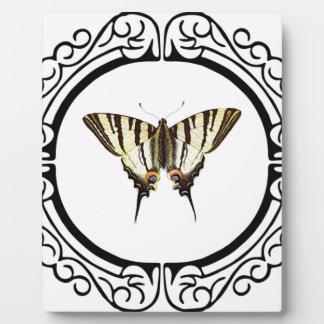 Placa Expositora círculo de la mariposa
