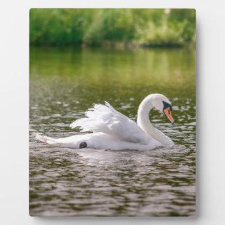 Placa Expositora Cisne blanco en un lago
