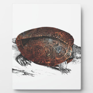 Placa Expositora Cosmic turtle 1