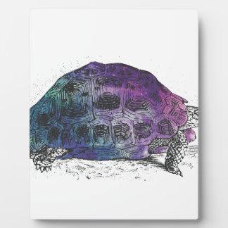 Placa Expositora Cosmic turtle 4
