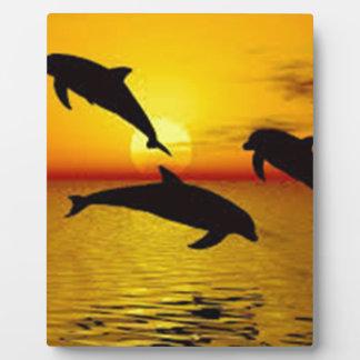 Placa Expositora delfín