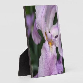 Placa Expositora Dicha del iris