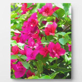 Placa Expositora Emblema floral del bougainvillea de la flor del