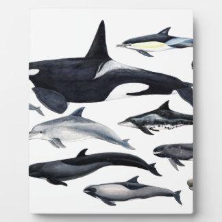 Placa Expositora Familia de los delfines: orcas, delfines, marsopas