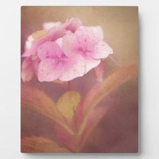 Placa Expositora flor