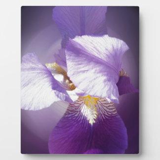 Placa Expositora flor púrpura del iris