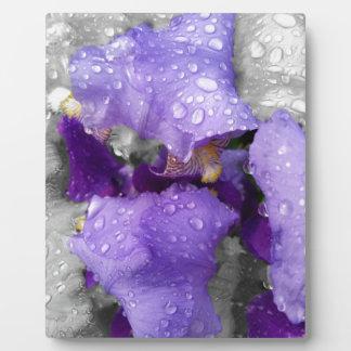 Placa Expositora gotas de agua en el iris