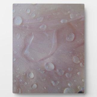 Placa Expositora Gotas de lluvia en un pétalo del iris
