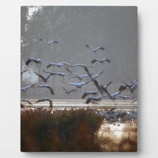Placa Expositora Grúas del vuelo en un lago