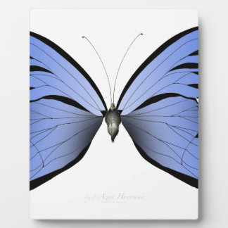 Placa Expositora Huntsman azul del azul de la mariposa 2