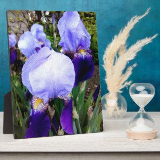 Placa Expositora Iris alemán y algunas gotas de agua