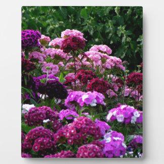 Placa Expositora Jardín de flores en verano