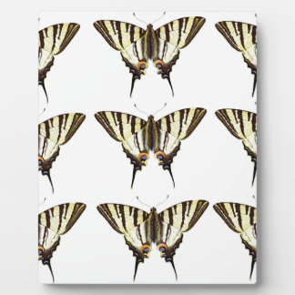 Placa Expositora Manojo de mariposas