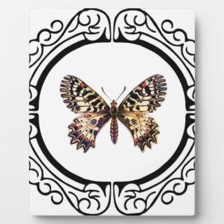 Placa Expositora mariposa anillada manchada