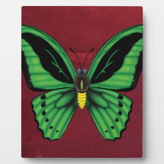 Placa Expositora Mariposa de Birdwing de los mojones