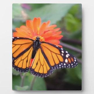 Placa Expositora Mariposa de monarca en la flor anaranjada