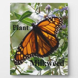 Placa Expositora Milkweed de la planta
