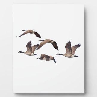Placa Expositora Multitud de gansos salvajes