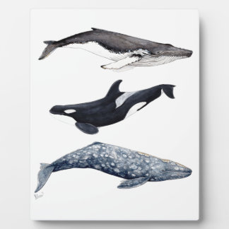 Placa Expositora Orca, ballena jorobada y ballena gris
