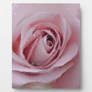 Placa Expositora palidezca - color de rosa rosado