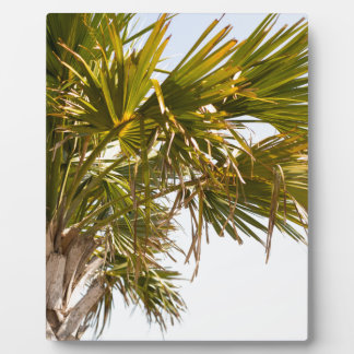 Placa Expositora Palmera de la costa este Myrtle Beach famoso