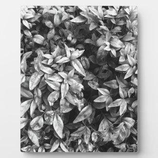 Placa Expositora Para el floral negro y blanco del amor -