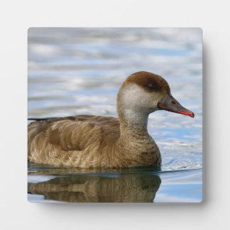 Placa Expositora Pato femenino del pato de mar, rufina del netta