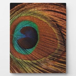 Placa Expositora peacocks-plume-1red y oro