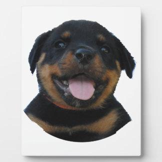 Placa Expositora Perrito masculino feliz de Rottweiler