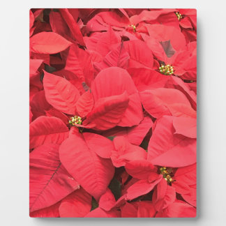 Placa Expositora Poinsettia rojo