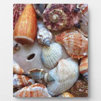 Placa Expositora Seashells por la costa
