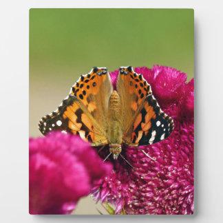 Placa Expositora Señora pintada Butterfly