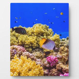 Placa Expositora Un arrecife de coral en el Mar Rojo cerca de