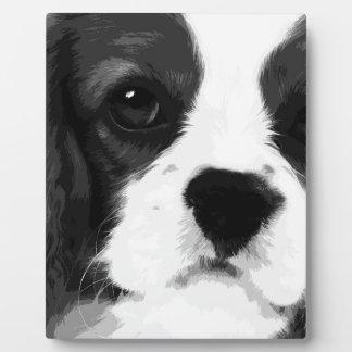 Placa Expositora Un perro de aguas de rey Charles arrogante blanco