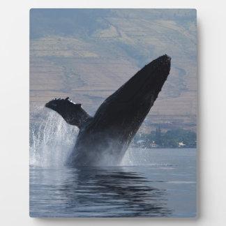 Placa Expositora violación de la ballena del humback