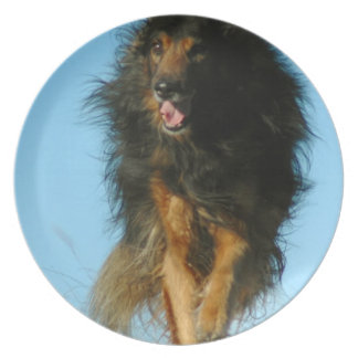 Placa finlandesa del perro de Lapphund Plato Para Fiesta