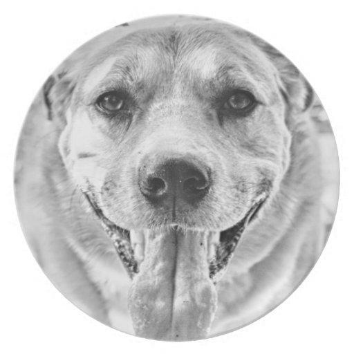 Placa frontal feliz del perro plato de cena