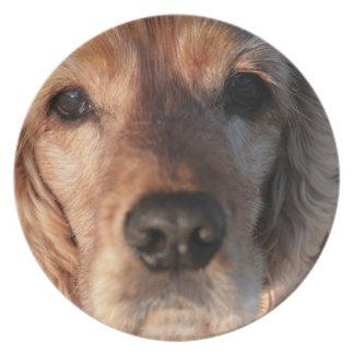 Placa linda del perro de aguas platos de comidas