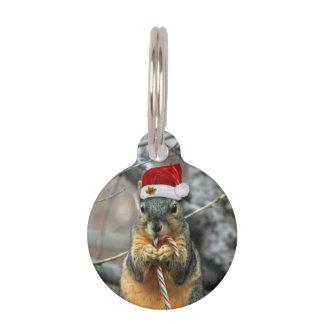 Placa Para Mascotas Ardilla del navidad